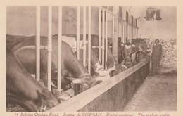 Mont-St-Guibert  ;Institut De Bierbais , étable Moderne ; The Modern Stable ( Vache ,laiterie  ) - Elevage