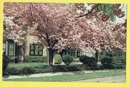 * Boitsfort - Watermaal Bosvoorde (Bruxelles) * (Edition Le Berrurier) Le Logis, Cerisiers En Fleurs, Kerselaar, Arbre - Watermael-Boitsfort - Watermaal-Bosvoorde