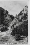 AK 0125  Hohe Wand - Leitergraben / Verlag Ledermann Um 1933 - Neunkirchen