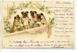 CHIENS 095 Quatuor Petits Bouledogues En Lecture 1902 Dos Non Divisé - Hunde