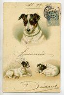 CHIENS  263 Illustrateur 3 Portraits Chiens écrite En 1905 Dos Non Divisé - Dogs