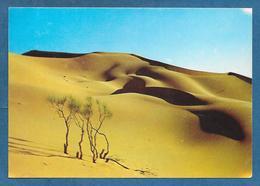 ALGERIE EL OUED 1985 - Algeria
