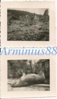Campagne De France 1940 - Breteuil (Oise) - Maisons Détruites Et Cheval Mort - Ville Bombardée - Westfeldzug - Wehrmacht - Guerre, Militaire