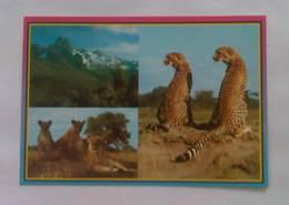Kenya - Kenya Postcard #42 - Kenya