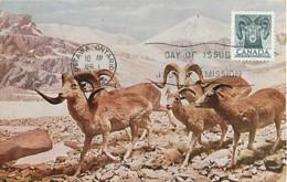 Canada Marco Polo's Sheep  1st Day Of Issue Carte Maximum Card CM - Maximumkaarten