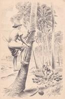 ASPECTOS DO BRASIL: O NORDESTE. TIRANDO COCOS. ILLUSTRATION. PERCY LAU. CIRCA 1940s NON CIRCULEE - BLEUP - Brazilië