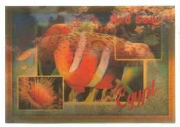 Trójwymiarowa Lenticulaire 3D - Ryby Fish - Pesci E Crostacei