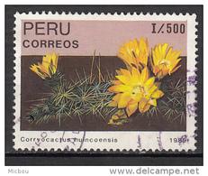 Pérou, Peru, Cactus, Fleur, Flower - Cactus