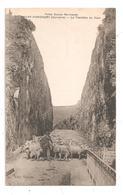 Thury-Harcourt-La Tranchée Du Hom-Moutons Berger-(C.8909) - Thury Harcourt