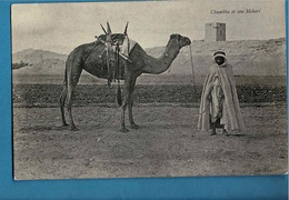 CHAMBBA ET SON MEHARI, DROMADAIRE,touareg - Scenes