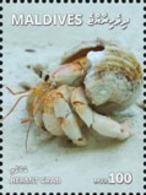 MALDIVES 2018 - Hermit Crab. Official Issue - Schaaldieren
