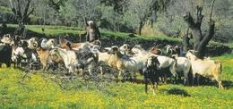 * Cyprus 1990's Postcard * Shepherd * Collection : Triarchos Horizon: H011 * - Cyprus