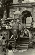 Kandy Temple, The Bearer Of The Tooth Relic, Elefant Mit Reliquie - Sri Lanka (Ceilán)