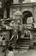 Kandy Temple, The Bearer Of The Tooth Relic, Elefant Mit Reliquie - Sri Lanka (Ceylon)