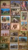 Lot De 20 Cartes Postales   / ELEPHANTS - Elephants