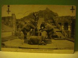 Allemagne - Germany - Deutschland - HAGENBECK ( Hamburg ) - Exposition Les Indes -Parc Zoologique Zoo Les éléphants 1913 - Germany