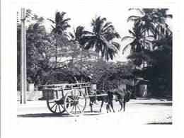 Photo Ancienne Madagascar , Attelage - Lieux