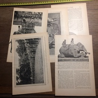 1909 DOCUMENT DRAMES DE LA JUNGLE RHINOCEROS TIGRE PANTHERE ELEPHANTS - Collections