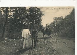 St Croix D.W.I. Dansk Vestindien   Delivering Grass  Donkey Cart Ane  Edit Benjamin - Vierges (Iles), Amér.