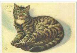 Chat - Kat - Katz - Cat - Europees Gestreepte Korthaar - Ontwerp KO Van Den Broecke - Chats