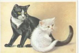 Chat - Kat - Katz - Cat - Bi-Coloured Korthaar - Ontwerp KO Van Den Broecke - Chats