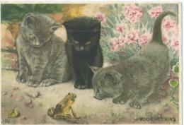 Chat - Kat - Katz - Cat - Uitg. Senefelder - 1953 - Chats