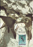 1993 Hirondelle De Rivage, Uferschwalbe, Riparia Riparia, Photo: Detlef Singer, Michel 2019: 1333, 22+7F. - Maximum Cards