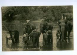 191803 CEYLON Temple Elephants Katugastota Vintage Postcard - Sri Lanka (Ceylon)