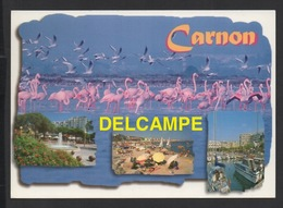 DF / 34  HERAULT / MAUGUIO- CARNON / CARNON-PLAGE / MULTIVUES ET FLAMANS ROSES - Mauguio
