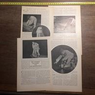 1909 DOCUMENT NOS RIVIERES RAVAGEES PAR LES BRACONNIERS - Vieux Papiers
