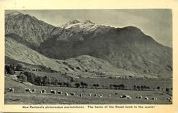 Pays Div -ref P377- Nouvelle Zelande - New Zeeland - The Finest Lamb In The World - - New Zealand