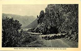 Pays Div -ref P376- Nouvelle Zelande - New Zeeland - The Finest Lamb In The World - - New Zealand