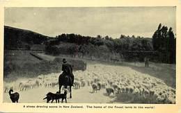 Pays Div -ref P375- Nouvelle Zelande - New Zeeland - The Finest Lamb In The World - Moutons - Sheeps - - New Zealand