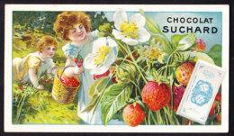 CHROMO Chocolat SUCHARD  Fruits Et Enfants     Fraises      Serie 106 - Suchard