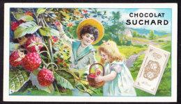 CHROMO Chocolat SUCHARD  Fruits Et Enfants    Framboises     Serie 106 - Suchard