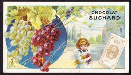 CHROMO Chocolat SUCHARD  Fruits Et Enfants     Raisin    Serie 106 - Suchard