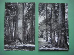 Allemagne - Germany - Deutschland --- Lot De 2 Cartes De La Forêt Noire - SCHWARZWALD : Grobe Tannen Bei Kalberbronn - Allemagne