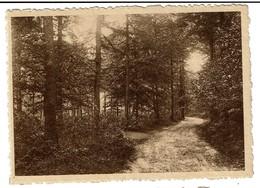 Orroir - Mont-de-l'Enclus / Kluisberg - Route Sous Bois - Circulée - Edit. Ovaert Frère & Soeur - 2 Scans - Mont-de-l'Enclus