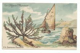 CPA Série Des Algues Marines Carte N° 4 Algue Laurencia Pinatifida - Mer Et Voilier En Arrière Fond - Sin Clasificación