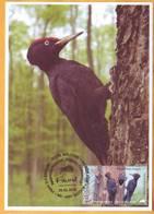 2018 Moldova Moldavie Private Maxicard Nature, Nature Reserve. Forest. Birds. Woodpecker. - Songbirds & Tree Dwellers