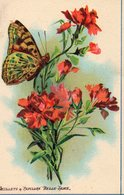 Image Fleurs   Oeillets - Old Paper