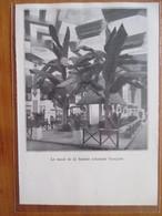 1935   Salon De La France D'Outre Mer Au Grand Palais - Bananiers Art Deco- Coupure De Presse Originale (encart Photo) - Documents Historiques