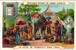 0757 Liebig 6 Cards Famous Animals From History Alexandre Cheval -Boeuf Apis-Caligula Cheval-Siam Eléphant Blanc-C1907 - Liebig