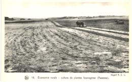 ASSESSE  Economie Rurale  Culture De Plantes Fourragères. - Assesse
