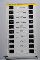 LESTRADE :   1720   SAVOIE  :  AIGUILLE DU MIDI VERSANT FRANÇAIS - Stereoscopes - Side-by-side Viewers