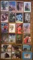 Lot De 22 Cartes Postales   / ELEPHANTS /b - Elephants