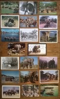 Lot De 20 Cartes Postales   / ELEPHANTS /b - Elephants