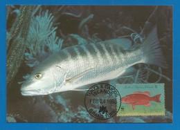 Turks & Caicos 1998 , Cubera Snapper / Cuberaschnapper - WWF Official Maximum Card   FEB 24 1998 - Turks & Caicos (I. Turques Et Caïques)