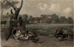 Hühner - Pfau - Pájaros