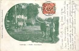CAMBODGE BUFFLES DOMESTIQUES - Cambodia